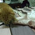 貓金A照片 016.jpg