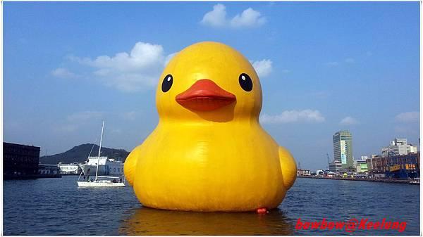 16.duck.jpg