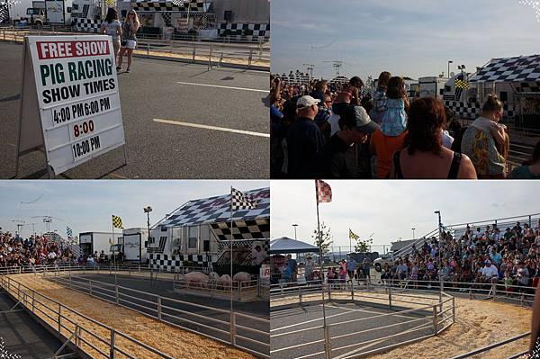 12.pig racing.jpg