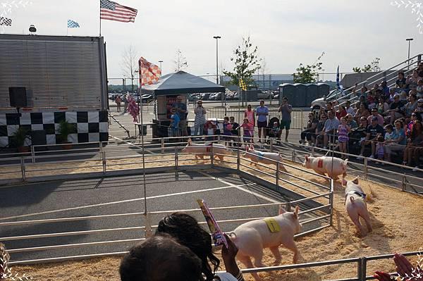 13.pig racing.jpg