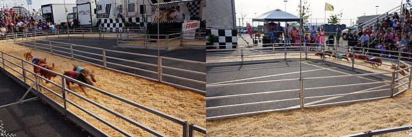 14.pig racing.jpg