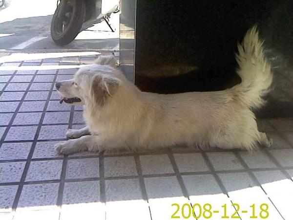 PIC081218008.jpg