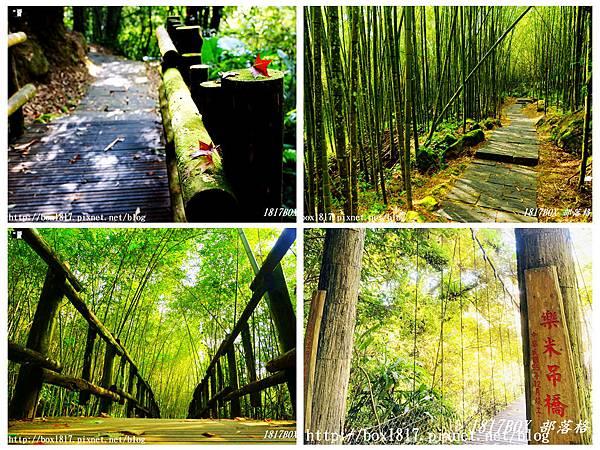 【嘉義。阿里山】迷糊步道。米洋溪步道。百年茄苳巨木。樂米吊橋