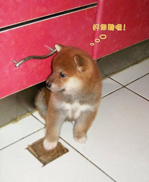 幼犬03.jpg