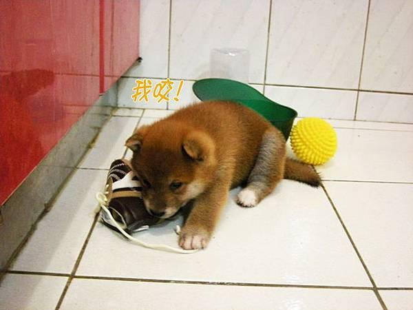 幼犬0628-2.jpg