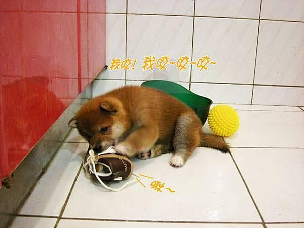 幼犬0628-3.jpg