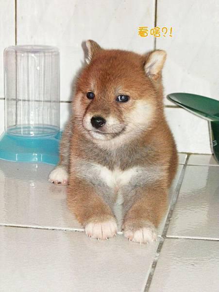 幼犬0703-1.jpg