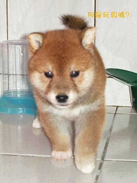 幼犬0703-2.jpg