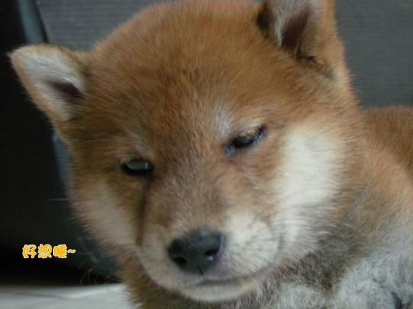 幼犬0709-2.jpg