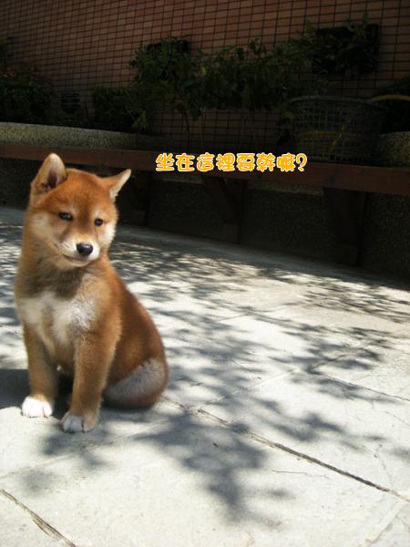 幼犬0724-2.jpg