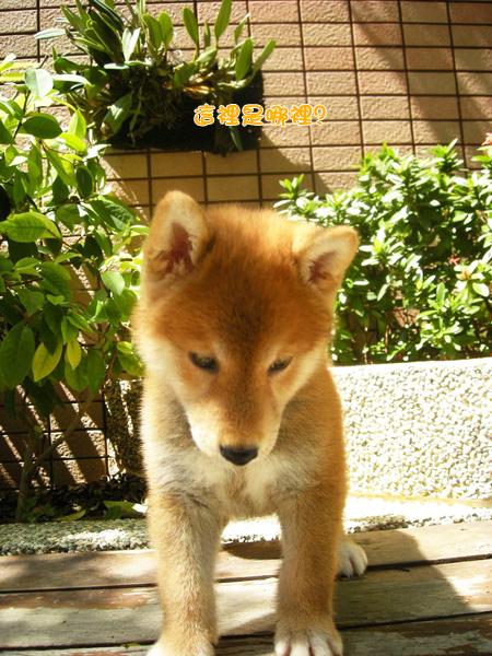 幼犬0724-3.jpg