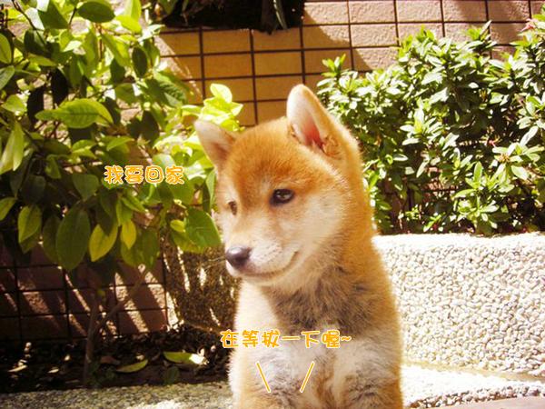 幼犬0724-4.jpg