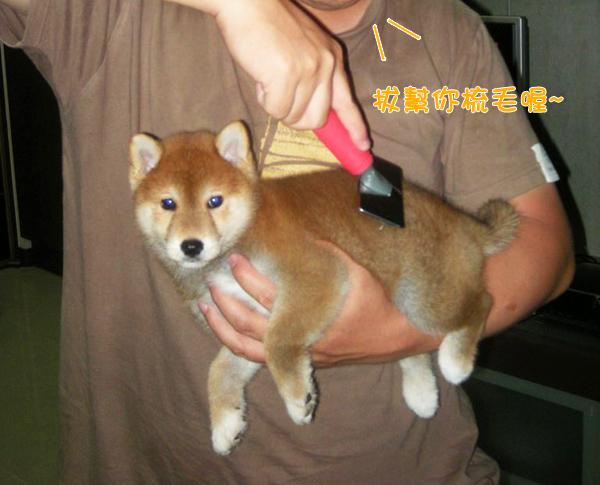 幼犬0729-1.jpg