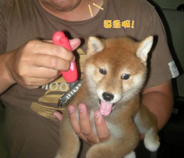 幼犬0729-2.jpg