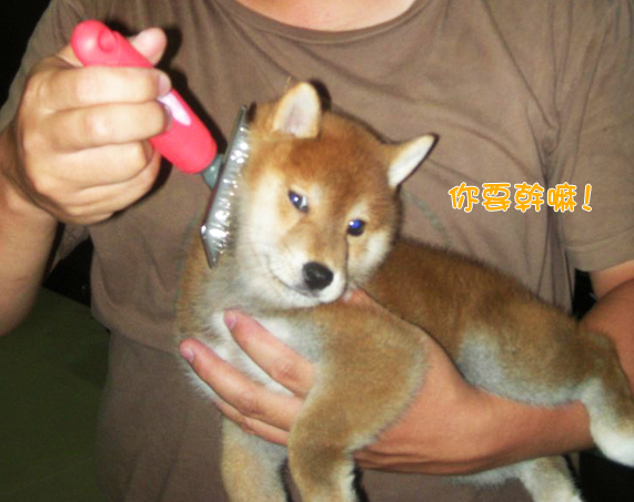 幼犬0729-4.jpg