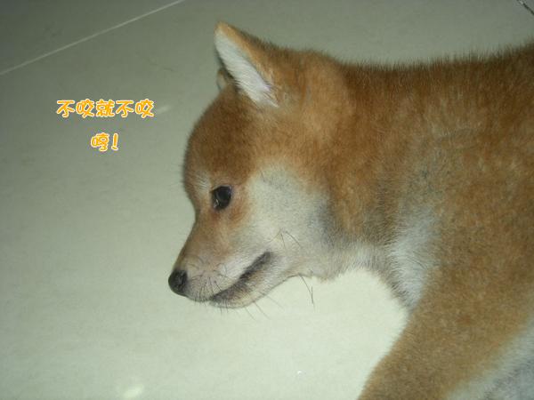 幼犬0821-2.jpg