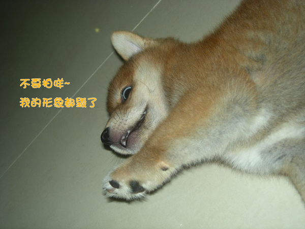 幼犬0821-4.jpg