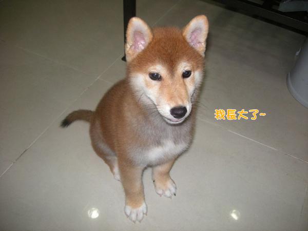 幼犬0827-1.jpg