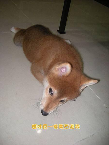 幼犬0827-2.jpg
