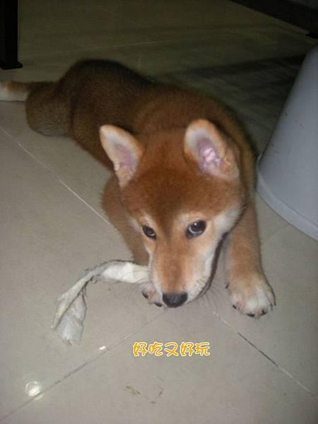幼犬0827-4.jpg