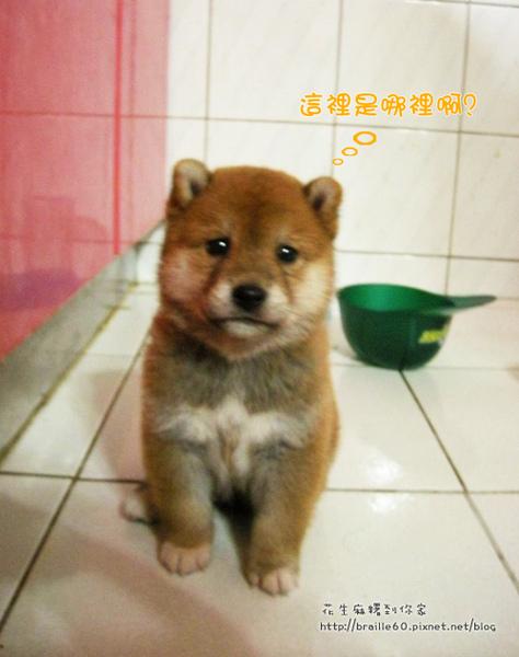 幼犬01.jpg