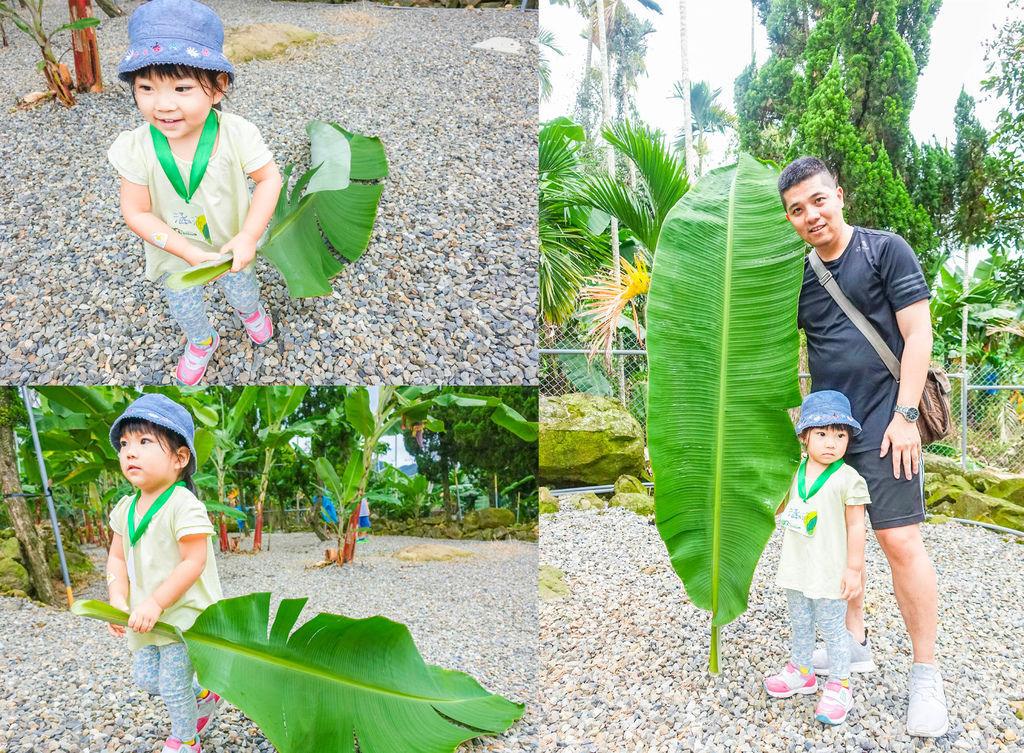 香蕉葉.jpg