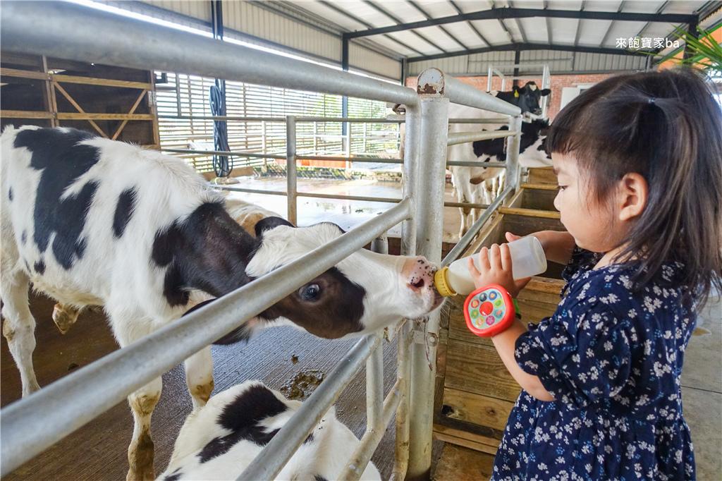 台南柳營親子景點乳牛的家 (8).jpg