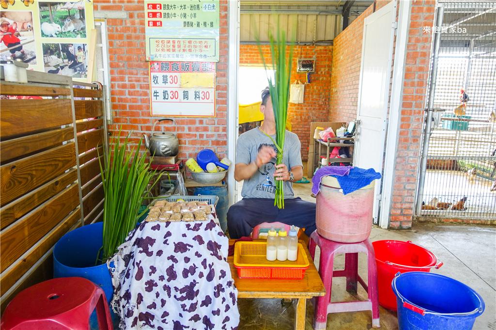 台南柳營親子景點乳牛的家 (6).jpg