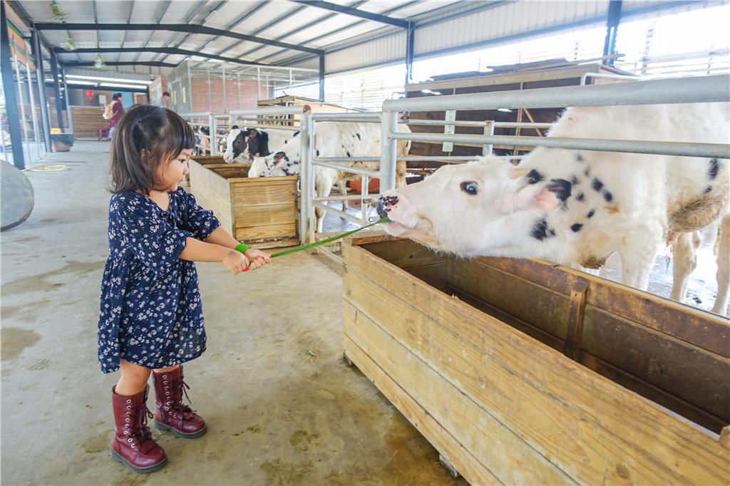 台南柳營親子景點乳牛的家 (11).jpg