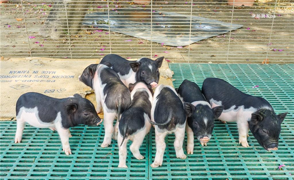 台南柳營親子景點乳牛的家 (14).jpg