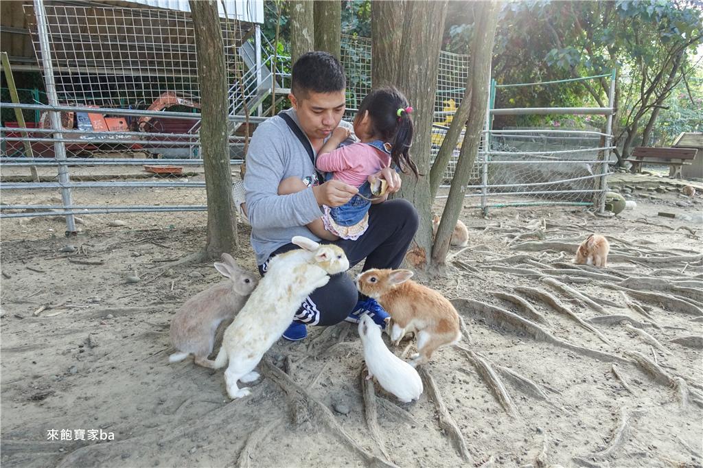台中農場-兔樂園 (4).jpg