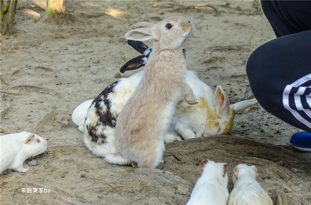 台中農場-兔樂園 (3).jpg