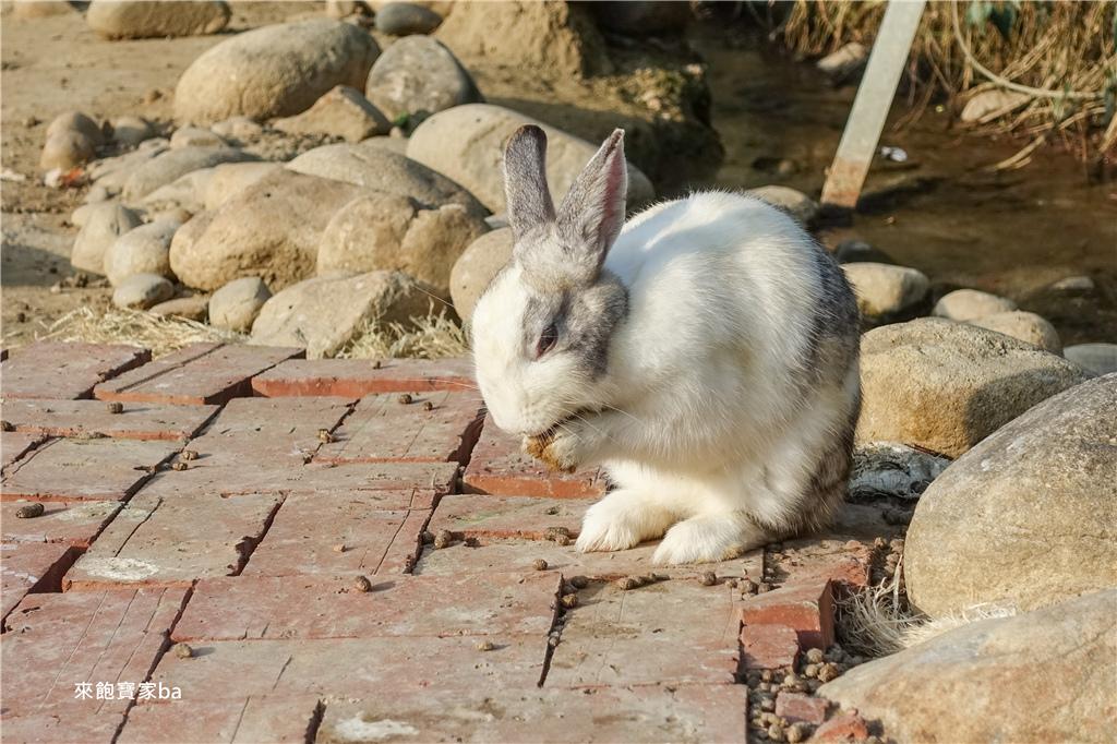 台中農場-兔樂園 (14).jpg