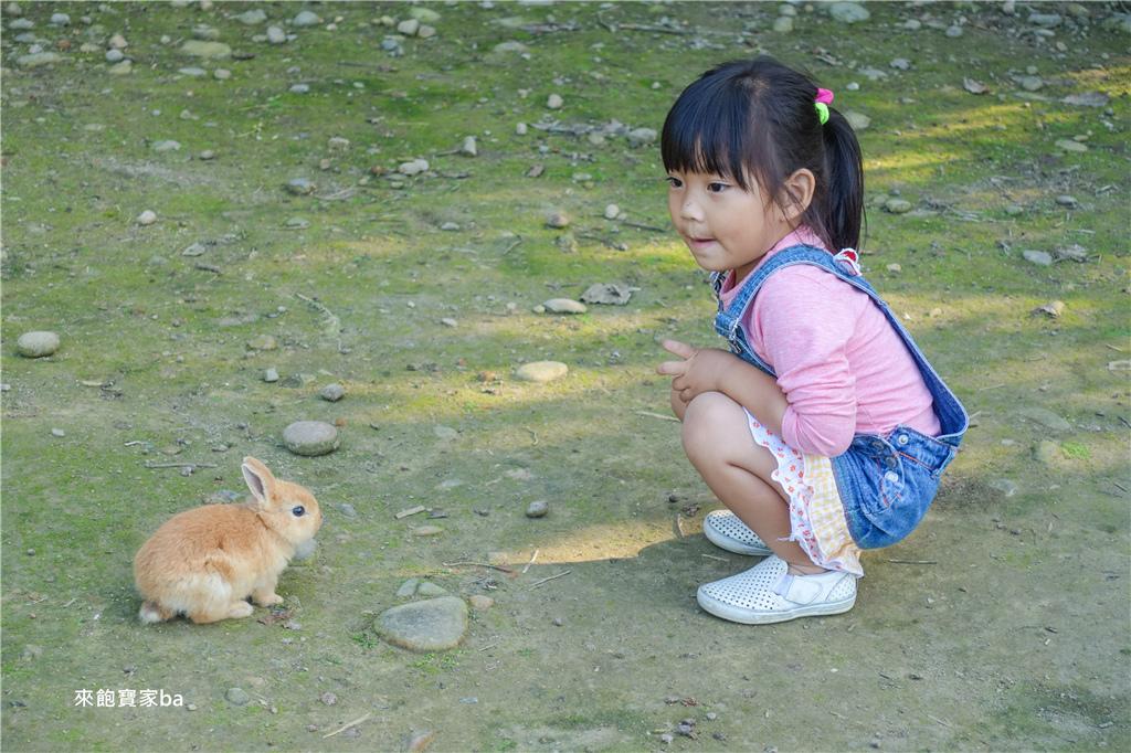 台中農場-兔樂園 (26).jpg