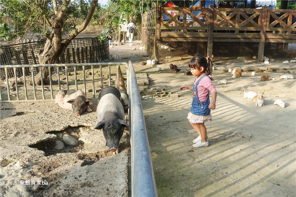 台中農場-兔樂園 (24).jpg