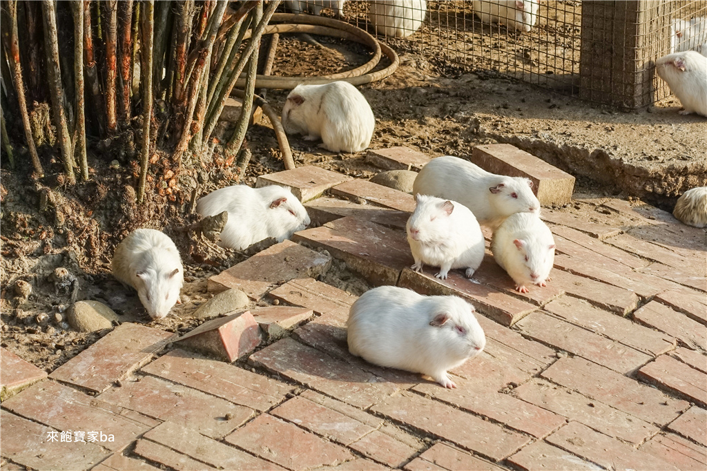 台中農場-兔樂園 (31).jpg