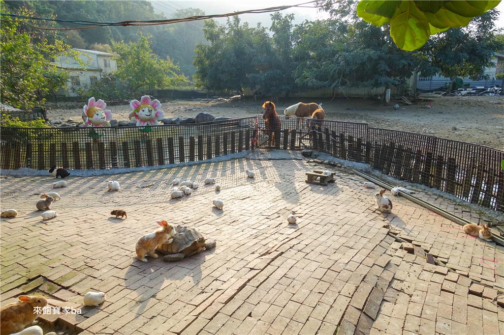 台中農場-兔樂園 (35).jpg