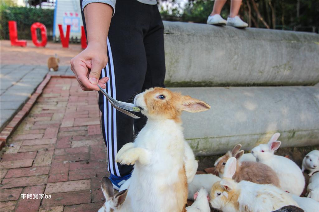 台中農場-兔樂園 (42).jpg