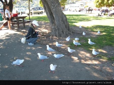 IMG_0380 Akaroa-海鳥全都虎視眈眈等我丟食物.JPG