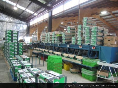 IMG_3051 Packhouse-Class 2分裝區,聽說這種顏色的箱子是銷台灣的.唉,二級果啊.JPG