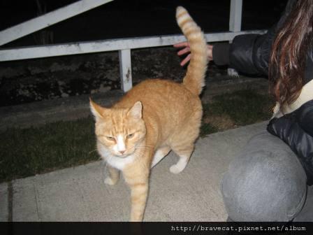 IMG_1720 Motueka - 這一天路上的小喵喵,要我摸他(Tuoor St).JPG