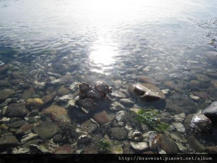 IMG_2876 Motueka Port -這裡的海水很清澈.JPG