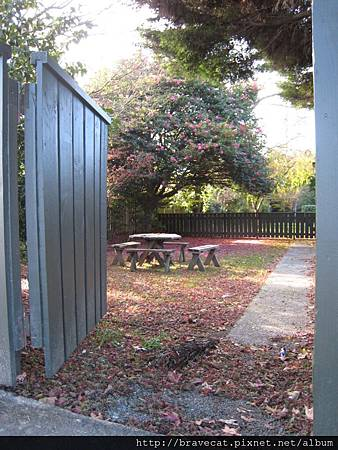 IMG_2844 Motueka-落花,充滿詩意的庭院(High St).JPG