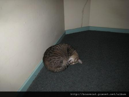 IMG_3156  Bakers Lodge - Honey 今天睡在樓梯口,一動也不動,而且身體捲曲的很奇怪,我還以為他......JPG