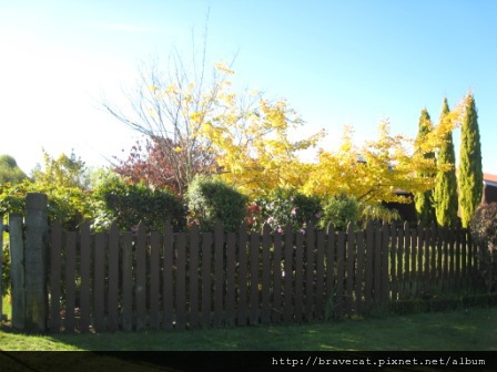 IMG_2381 Motueka - 充滿秋天氣息的庭院(Fearon St).JPG