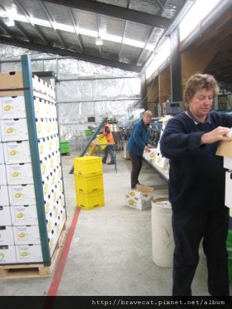 IMG_0157 Packhouse - 經理們都忙著收拾.JPG