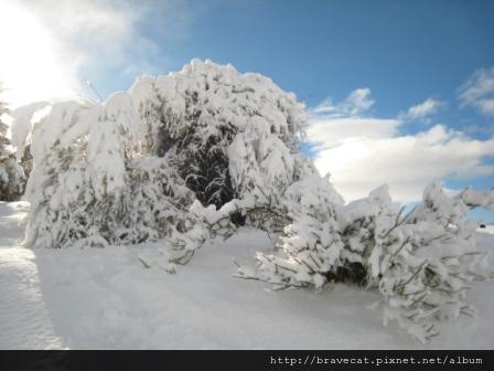 IMG_1148  Lake Pukaki是不是所有的東西覆上白雪都會變美呢.JPG
