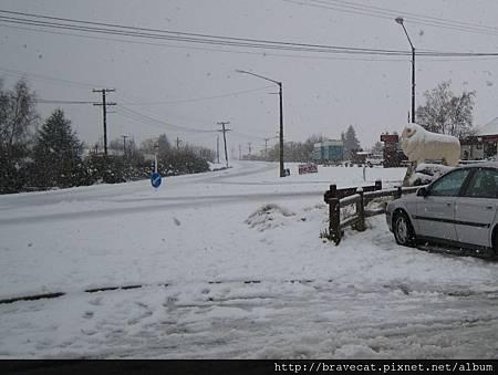 IMG_1155 Omarama看到生平第一次的大雪紛飛.JPG