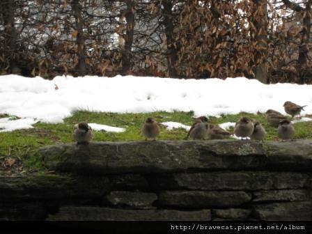 IMG_1364 Arrowtown- 這一排圓滾滾的小鳥正在等我們的派.QQ.JPG