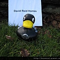 IMG_1714 No. 55 David Reid Homes.JPG